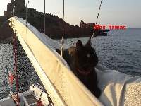 **yachting-direct** yachting_direct_etap26-miniphoto 9